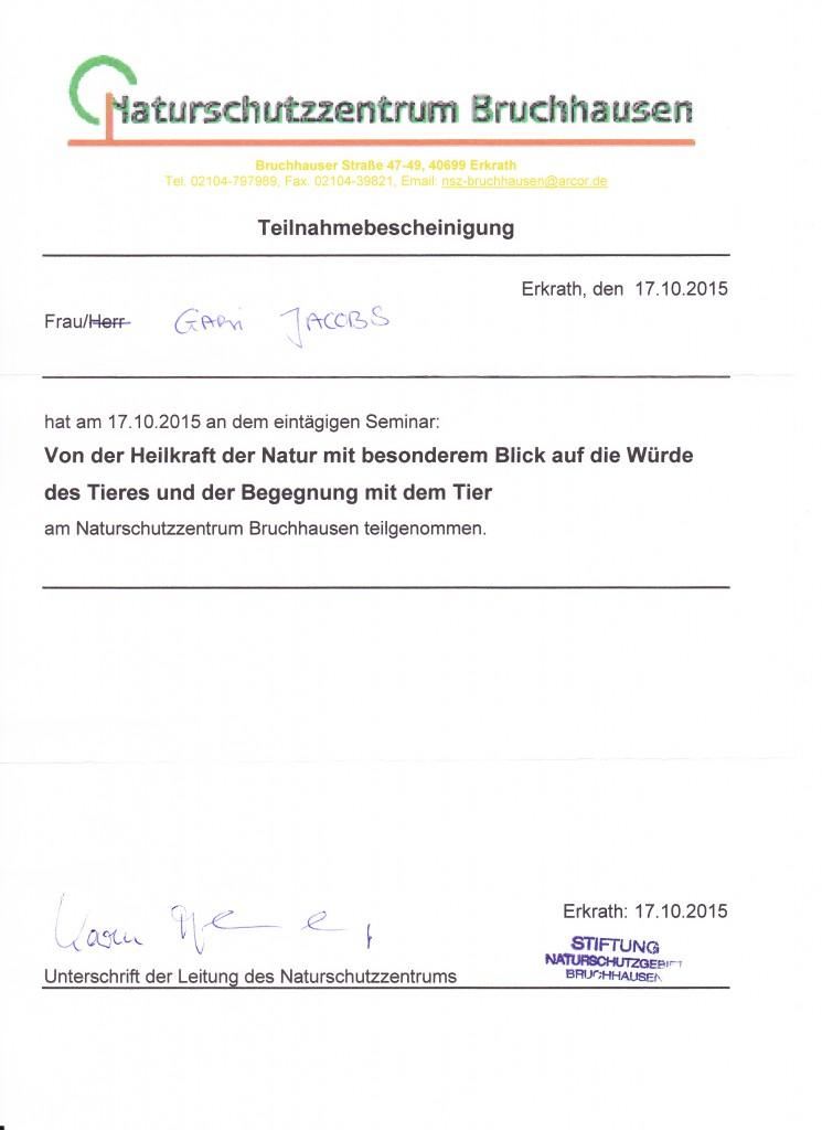 15 bruchhausen